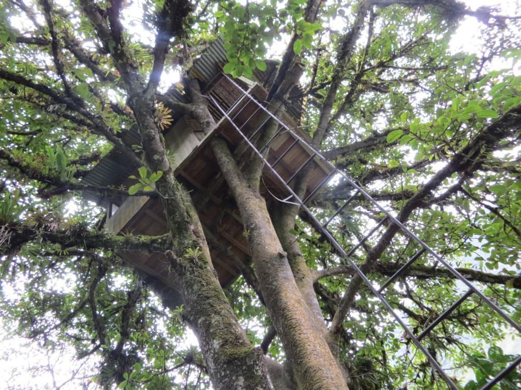 Treehouse at Toboganes Nahuazo