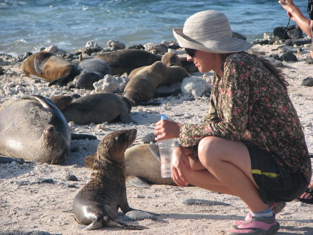 galapagos-islands-sea-lion-budget-travel